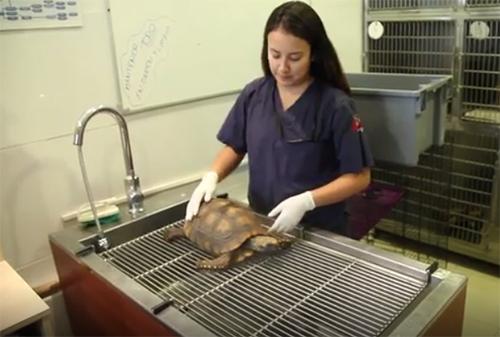 El Centro Veterinario de Vida Silvestre cerró temporalmente